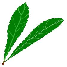 תוצאת תמונה עבור עלים ירוקים